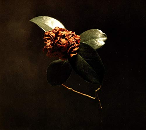 St. Paul & The Broken Bones - Young Sick Camellia